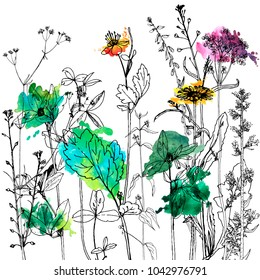 Vector background with drawing wild plants, herbs and flowers and paint stains, botanical illustration, natural floral template