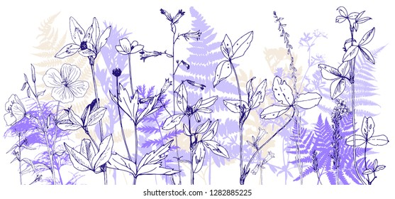 Vector background with drawing wild plants, herbs and flowers, botanical illustration, natural floral template
