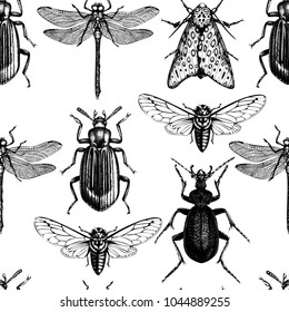 Vector background with hand drawn insects illustrations. Black butterfly, cicada, beetle, bug, dragonfly drawing. Entomological seamless pattern.