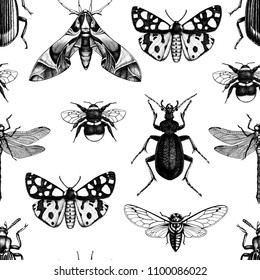 Vector background with high detailed insects illustrations. Hand drawn butterflies, beetles, cicada, bumblebee and dragonfly sketches . Vintage seamless pattern.