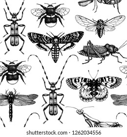 Vector background with high detailed insects sketches. Hand drawn butterflies, beetles, dragonfly, cicada, bumblebee, grasshopper, mantis illustrations. Entomological seamless pattern