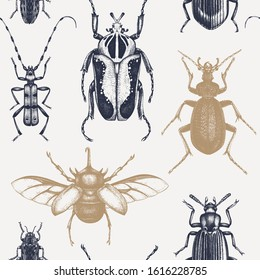 Vector background with high detailed insects sketches. Hand drawn beetles illustrations in vintage style. Entomological backdrop. Engraved beetles seamless pattern.Insects outlines.