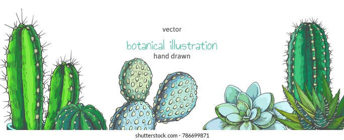 Vector background with houseplants. Vintage color illustration with cactuses and succulents for design. Natural texture with floral elements in engraving style