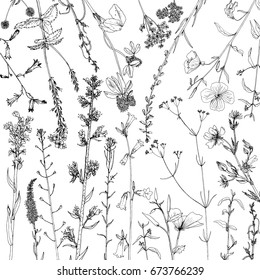 Vector background with ink drawing wild plants, herbs and flowers, monochrome botanical illustration in vintage style, floral template