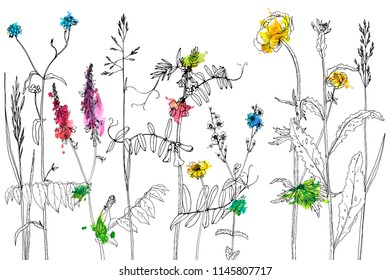 Vector background with line drawing wild plants, herbs and flowers and watercolor paint stains, botanical illustration, natural floral template