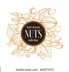 Vector background with a line of handmade sketches nuts. Set isolated on a white background: almonds, hazelnuts, walnuts, peanuts in vintage style