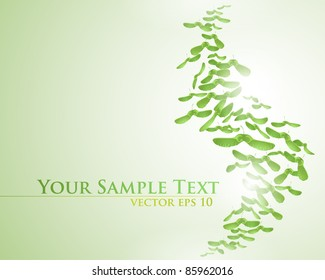 vector background with maple seeds