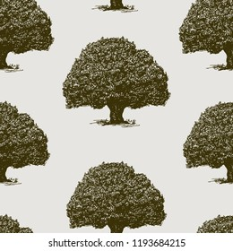 Vector background of old oaks trees