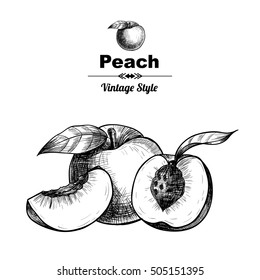 Vector background with peaches  . Hand drawn. Vintage style