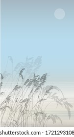 Vector background with silhouette reeds backwater.