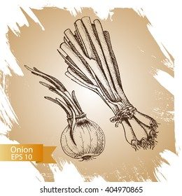 Vector background sketch green onion. Illustration vegetable.