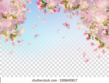 Vector background with spring cherry blossom. Sakura branch in springtime with falling petals and partially transparent background