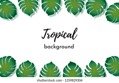 Vector background. Template with isolated frame green exotic tropical palm leaves on a white background
