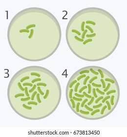 vector bacteria growth stages. bacterium in petri dishes isolated on white background. eps10 illustration