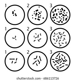 vector bacteria growth stages. black bacterium cells in petri dishes isolated on white background