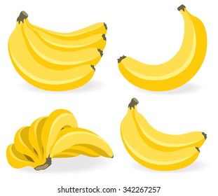 Vector banana. Bunches of fresh banana fruits isolated on white background, collection of vector illustrations