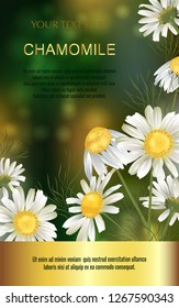 Vector banner with chamomile flowers for invitation, packaging, cosmetics, perfume, healthy food. Space for text.
