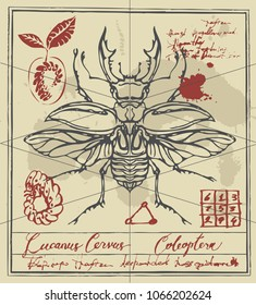 Vector banner with drawing of a stag-beetle, handwritten inscriptions and ink stains in retro style