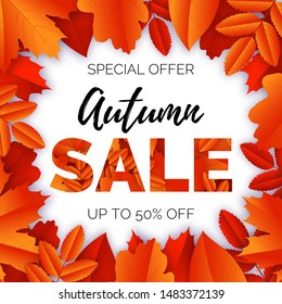 Vector banner with text Autumn Sale and frame of maple, oak, rowan yellow and red leaves on white background. Poster design template.