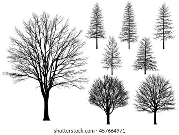 Vector bare tree isolated on a white background.