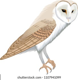 vector barn owl - tyto alba