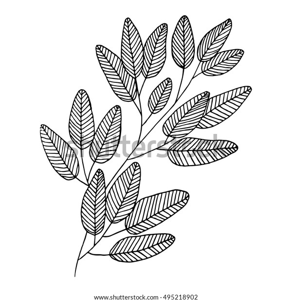 vector-bay-leaves-monochrome-contour-600