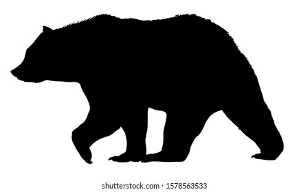 Vector bear silhouette isolated on white background.