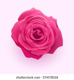 Vector beautiful flower deep pink rose isolated on white backgro