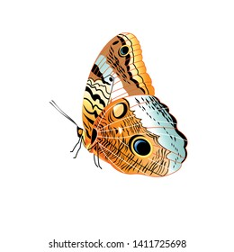 Vector beautiful patterned butterfly isolated on white background