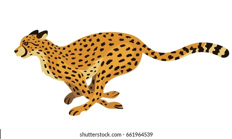 Vector beautiful running cheetah big wild cat isolated on white background side view zoo illustration fastest mammal animal