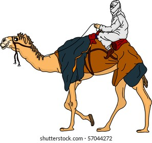 vector - bedouin riding a camel,isolated on background