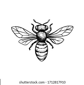 vector bee illustration, black and white ink hornet