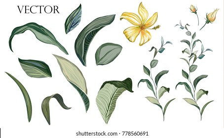 Vector Big Set botanical elements - wildflowers, herbs, leaf. collection garden and wild foliage, flowers, branches.  illustration isolated on white background, tropical leaf. Green.