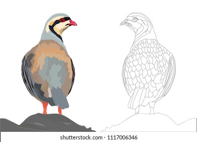 Partridge Drawing Images, Stock Photos & Vectors | Shutterstock