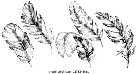 Vector bird feather from wing isolated. Isolated illustration element. Vector feather for background, texture, wrapper pattern, frame or border.