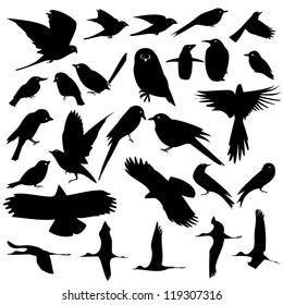 vector of bird set