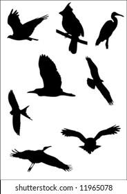 vector bird silhouette pack 3