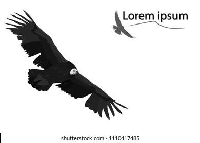 Vector bird. Vulture flying. Vector image.