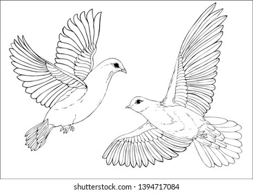 Vector birds isolated. Isolated illustration element. Vector white pigeons for background, texture, wrapper pattern, frame or border.