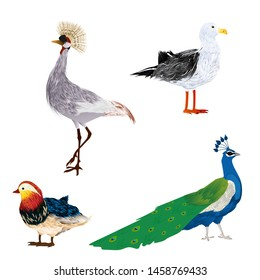 Vector birds set over white background. Seagull, crowned crane, peacock and mandarin duck.