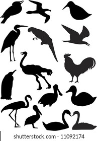 vector birds shapes