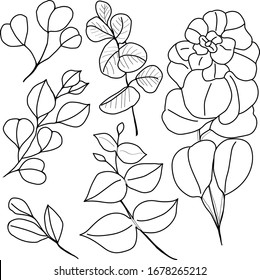 Vector black contour illustration set with different eucalyptus sketch leaves on branches isolated on the transparent background for design elements and coloring book