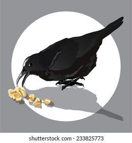 Vector black crow eating nut.