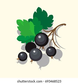 Vector Black Currant Colorful Illustration Isolated on Light Background.
