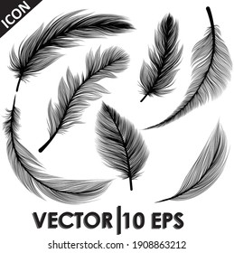 Vector black feathers collection. Vector illustration eps10.
