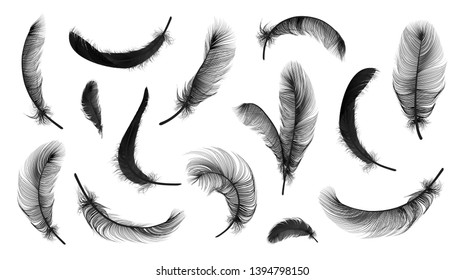 Vector black feathers collection, set of different falling fluffy twirled feathers, isolated on white, transparent background. Realistic style, colorful vector 3d illustration.