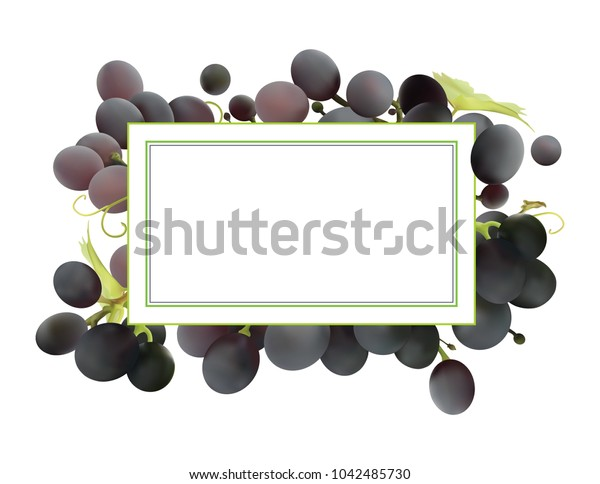 vector black grapes isolated on white