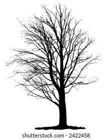 Vector black isolated tree silhouette on white background