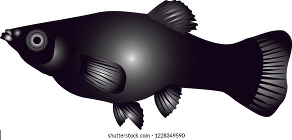 Vector - Black Molly Fish