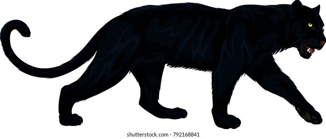 vector black panther illustration